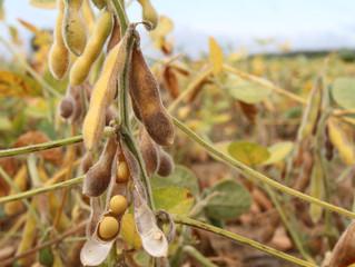 Produção de soja cresce 43,5% em Santa Catarina no intervalo de oito anos