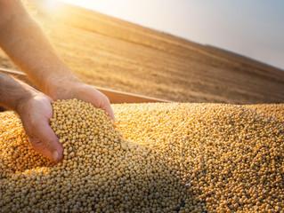 Soja: preço segue em alta; área de soja deve crescer no BR