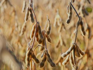 Safra de soja do Brasil deve crescer quase 6% diante de rentabilidade jamais vista