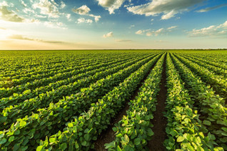 Agronegócio Notícias – Valor Bruto da Produção pode atingir R$ 1 trilhão até o fim deste ano