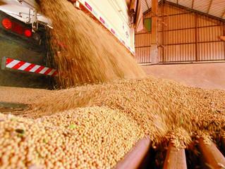 Valorização no preço da soja preocupa indústrias sobre abastecimento, aponta Cepea