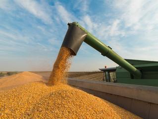 Valor da Produção Agropecuária de 2020 soma mais de R$ 871 bi e é o maior da história, aponta MAPA