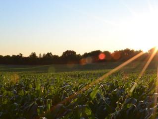 Agropecuária lidera a geração de novas vagas de emprego