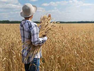 Agronegócio Notícias – Produção de grãos deve chegar a 268,3 milhões de toneladas, diz Conab