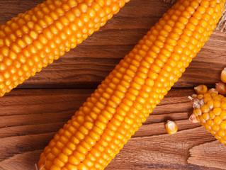 """Confira como anda o mercado do milho no Brasil """"Os preços mantiveram a alta do dia anterior em R$ 66"""