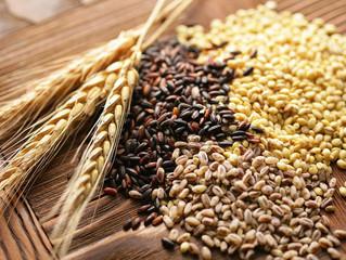 Área de grãos aumentará pelo 11º ano em 20/21 e pode gerar safra recorde