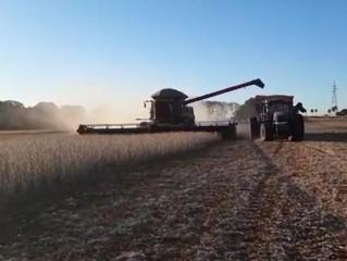 O Agro Não Para: produtores de MS mantêm atividades para abastecimento de alimentos durante pandemia