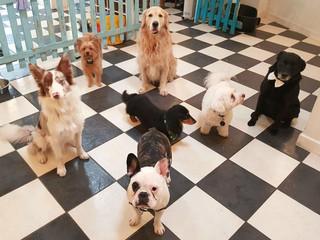 What Good Doggies