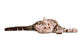 Download-Cat-PNG-12.png