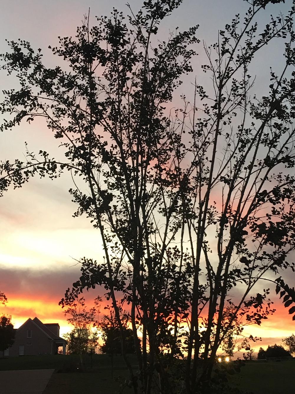 Gratitude Sunset