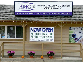 Chamber Member Spotlight - Animal Medical Center