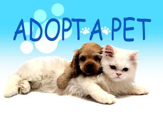 Golden Belt Humane Society Adopt A Pet July 11