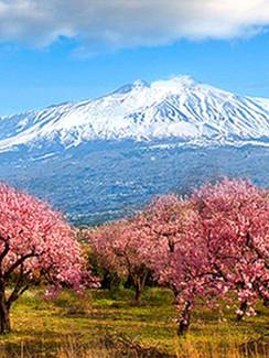 Mandelblüte am Ätna