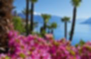 Kamelienblüte.png