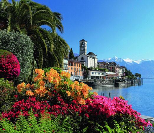 Kamelienblüte Lago Maggiore