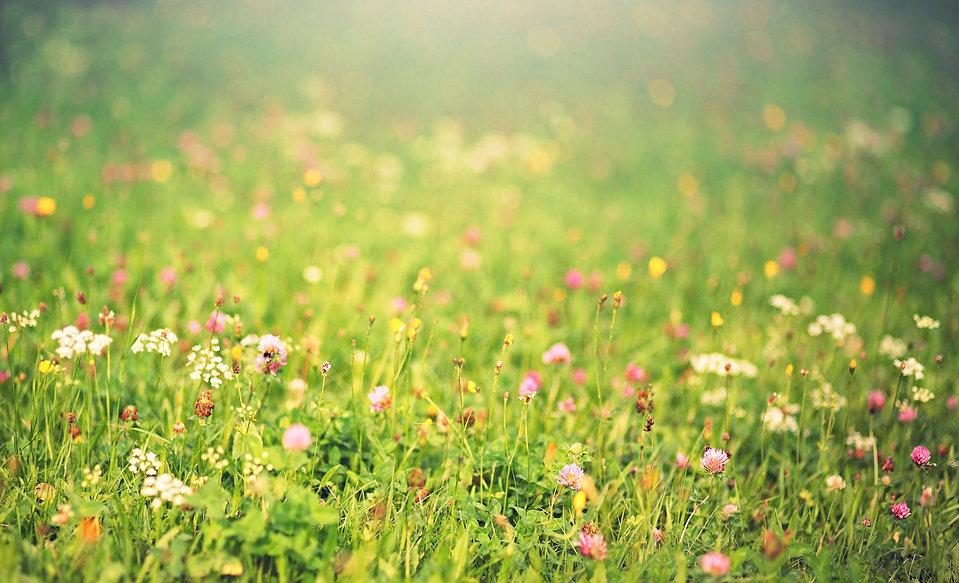 meadow-3866009_1920 (1).jpg