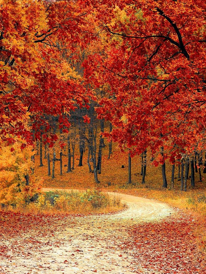 farbenfroher Herbst im Bay. Wald