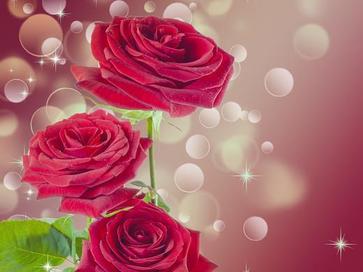 rose-1985471_1920.jpg