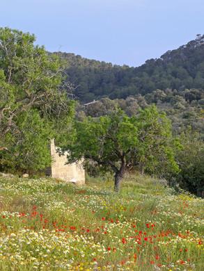 Mallorca Frühling
