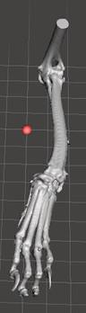 3D  רגל קדמית.JPG