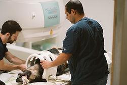 דר אשר וחן הטכנאי ממקמים כלב לסריקת MRI