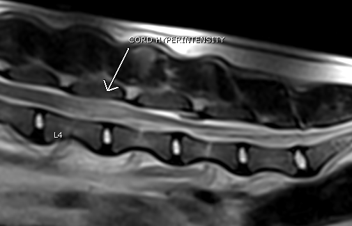 סריקת MRI של כלב מדגים באזור הלומברי