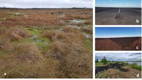 Smart observations of peatland function - Smartbog