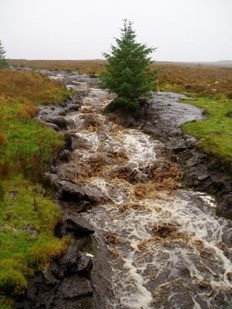 """Till Birnam Wood remove to Dunsinane"": Implications of the Meenbog Peat Slide"