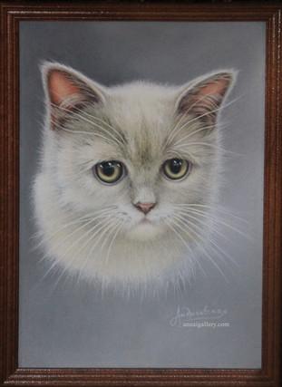 Печальный котенок
