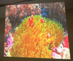 Soothing Video Aquarium