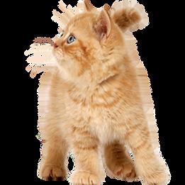 kitten-transparent-15.png
