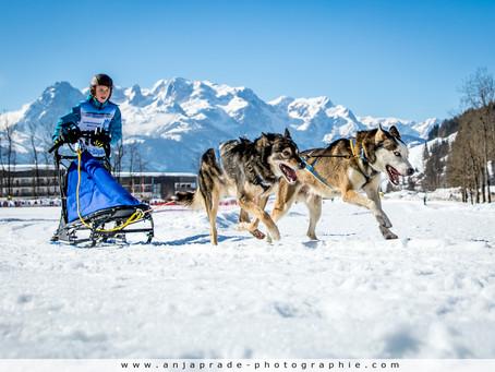 Hundeschlittenrennen Werfenweng