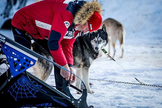 Sportfotografie Hundeschlittenrennen