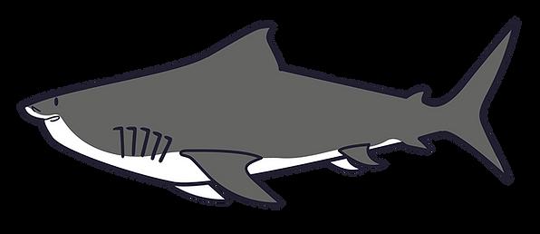 001 - Shark-01.png