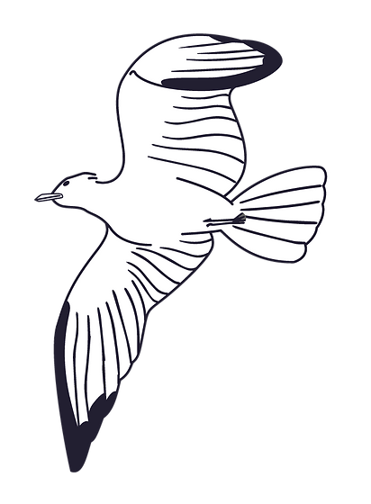 011 - seagull-01.png