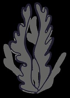 004 - Seaweed-01.png