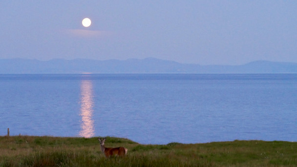 Pink Moon and Deer