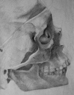 Anatomical Study of a Skull
