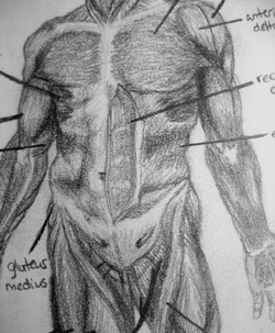 Anatomical Diagram of the Male Body