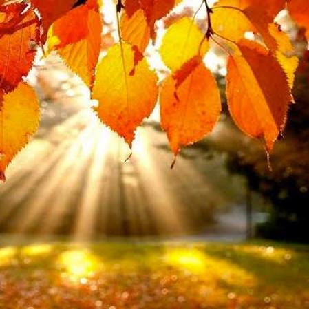Yoga all-inclusive Autumn Day Retreat
