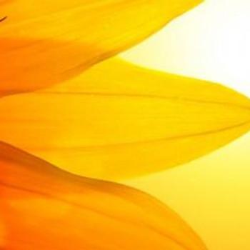 Summer Solstice - 108 Sun Salutations and Yoga Nidra