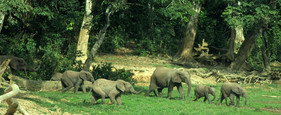 elephant1-1040x425.jpg