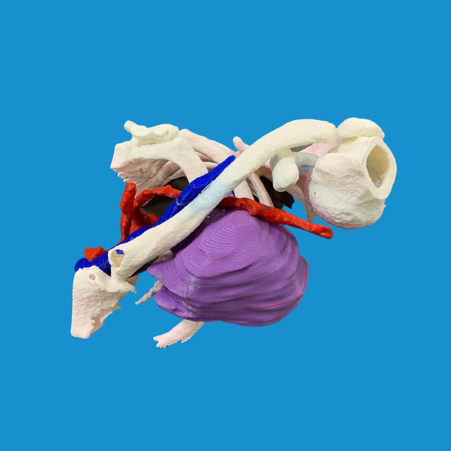 Biomodelo para cirugía de tórax
