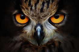 Fractals background owl portrait animal.