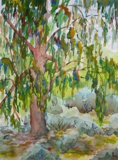 My Eucalyptus
