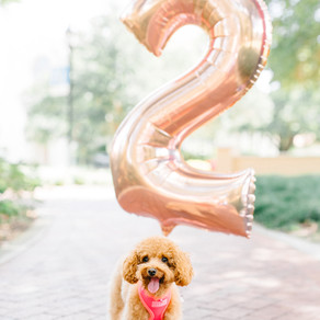 Rosie Turns TWO! (Video at bottom!)