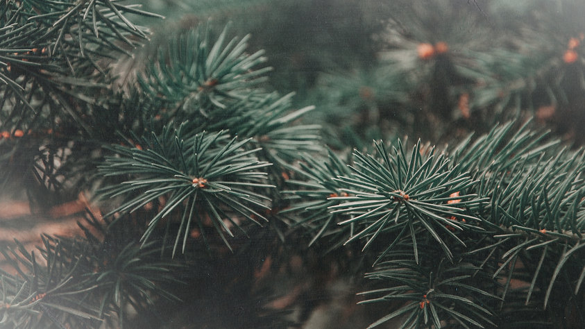 The Songs of Christmas Green Pine Tree-B