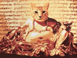 Golden Buddha Cat