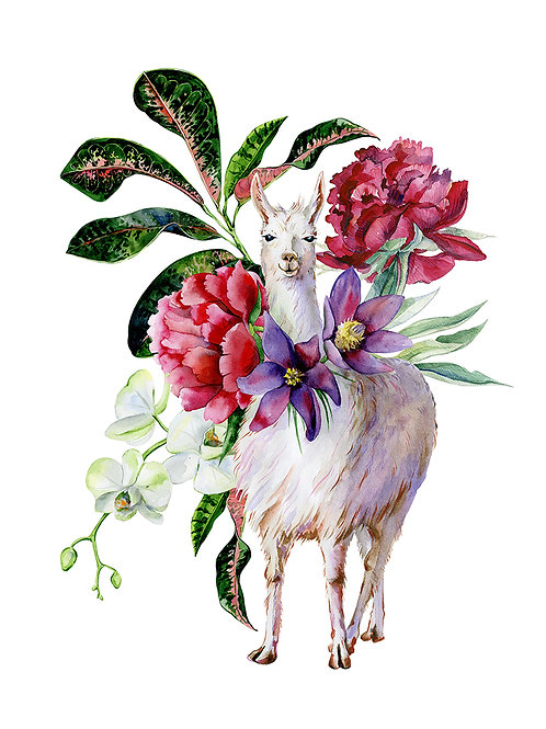 Lux Llama Boxed Cards-Set of 25