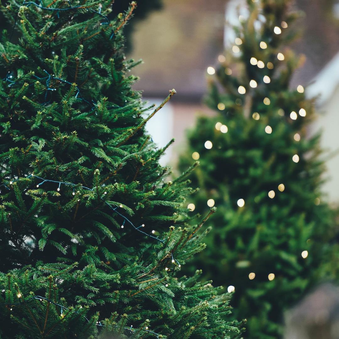 Christmas Tree Pick-up